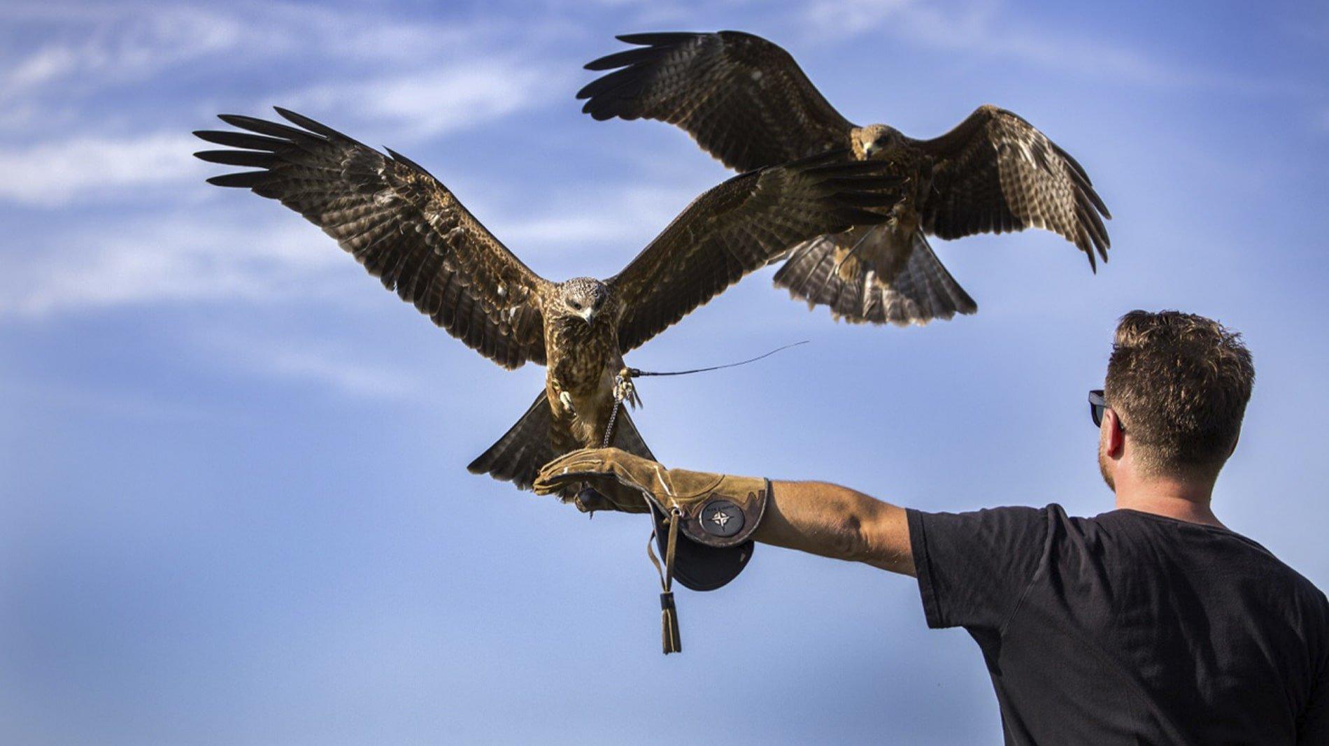 Falconry & Bird Handling at New House Farm Country Retreat