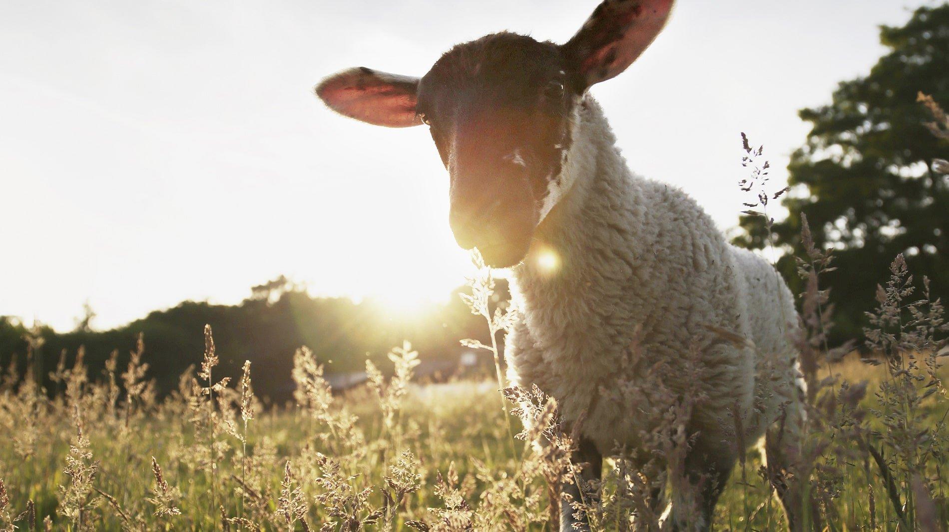 New House Farm Country Retreat